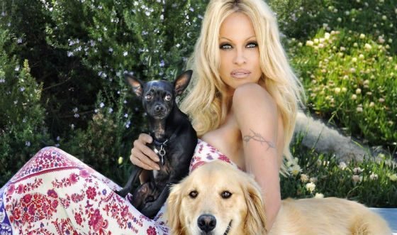 Caring for dogs helped Pamela Anderson to cope with depression