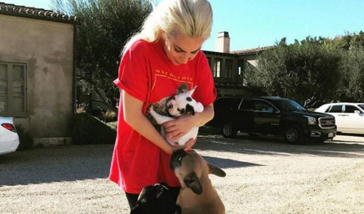 Lady Gaga`s dog-walker shot and bulldogs stolen