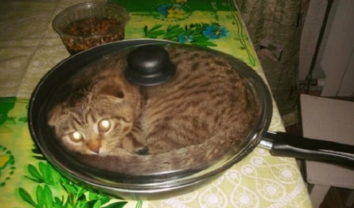Wanna try some fried cat?