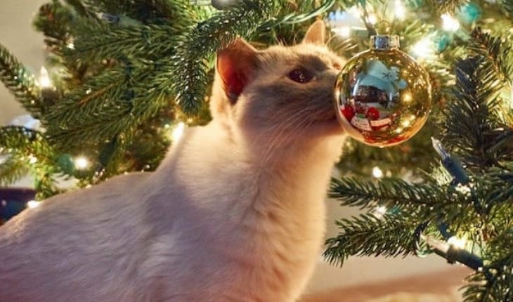 Cats and Christmas balls – love forever
